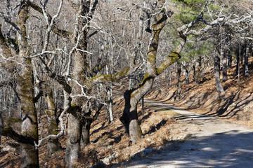 Camino en La Angostura. Sierra de Gredos