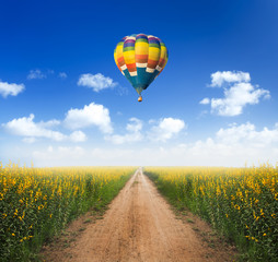 Hot air balloon over dirt road into yellow flower fields with cl