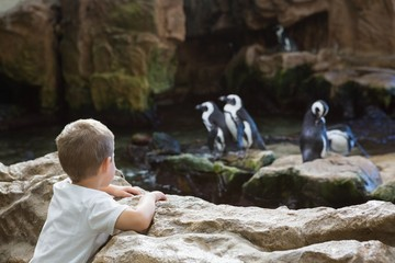 Little boy looking at penguins