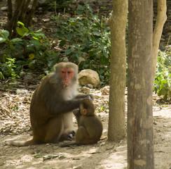 Обезьяна кормящая своего детёныша