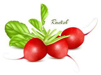 Fresh radishes.