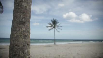 Palmeras en una playa del Caribe
