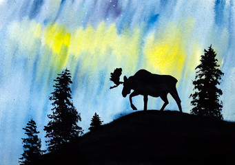 moose and northern lights