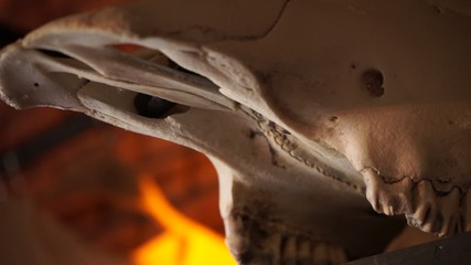 Skull large cloven-hoofed animals