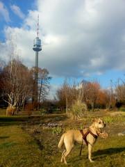 Hund im Donaupark Wien