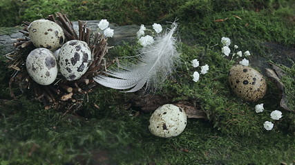 Eggs in a nest on a background of moss