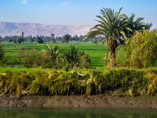 Shore of the Nile River in Egypt.