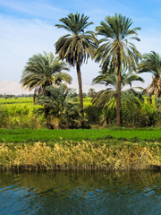 Nile riverside with palms in Egypt