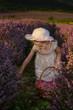 Child harvesting lavender, holding a basket in a lavender field