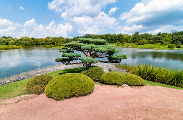 Bonsai tree in the japanese garden of Chicago Botanic Garden