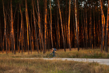 Cyclist Riding the Bike on Trail in Beautiful pine Forest