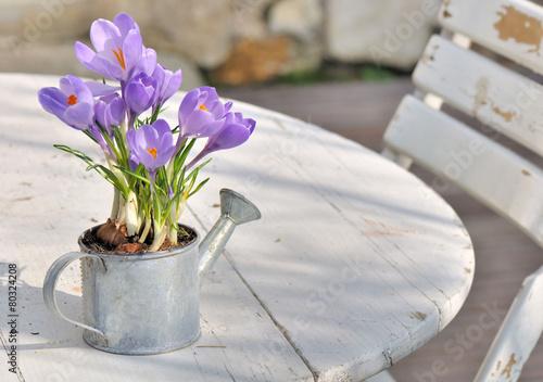 Aluminium Krokus crocus en pot sur table en terrasse