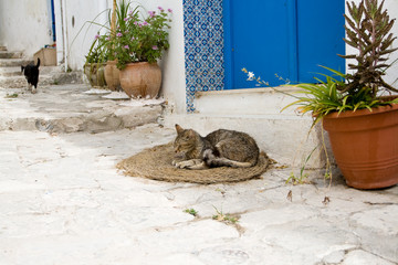 The gray cat sleeping on mats in front of the house