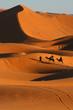 Zdjęcia na płótnie, fototapety, obrazy : balade en dromadaire dans le désert de Merzouga