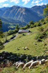 Flock of sheep in the autumn Pyrenees