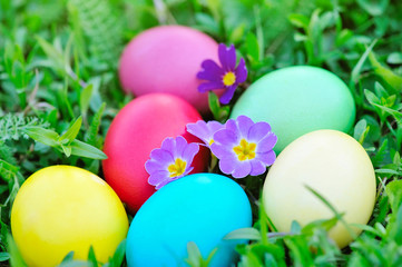 Colored easter eggs with flowers primrose on green grass