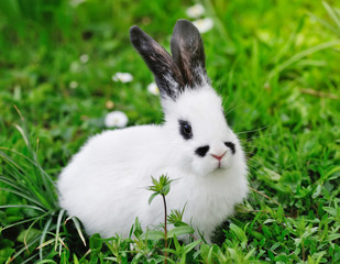Baby white rabbit on grass