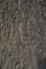 Alder tree bark