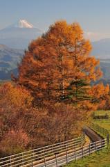 outono em japão