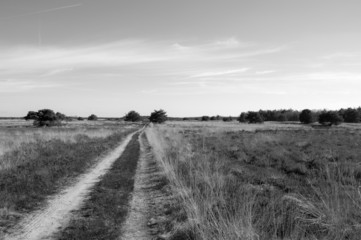 Lonely path in moorland