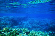 Leinwanddruck Bild - Underwater