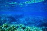 Underwater - 80340653