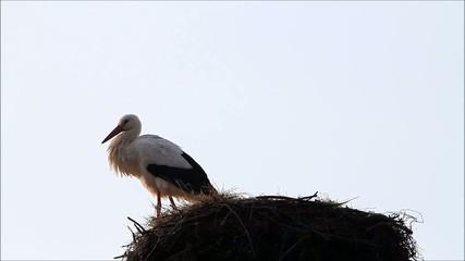 stork, nest, alone, springtime, background sky, space