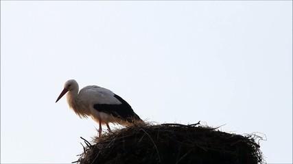 stork on nest, alone, springtime, background sky, space