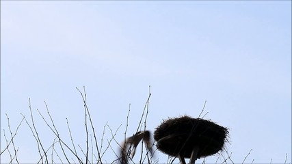 stork on nest fly away, alone, background, sky, space
