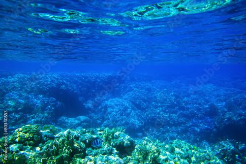 Leinwanddruck Bild Underwater