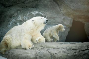 polar bear female with her little baby