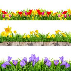 schöne Frühlingsfreisteller Krokus,Wiese,Tulpen,Osterglocken