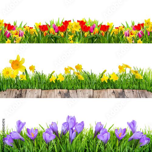 Papiers peints Sauvage schöne Frühlingsfreisteller Krokus,Wiese,Tulpen,Osterglocken