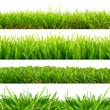 4 Wiesen Gras Freisteller