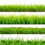 Fototapety 4 Wiesen Gras Freisteller