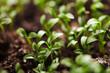macro seeds growing
