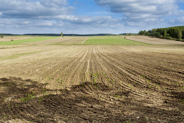 Agricultural landscape, plowed field.