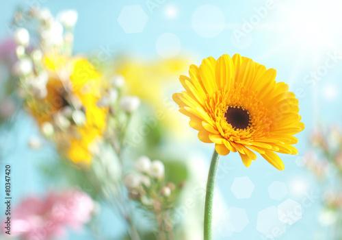Spoed canvasdoek 2cm dik Gerbera Spring daisy