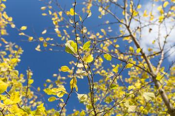Plum tree at Fall