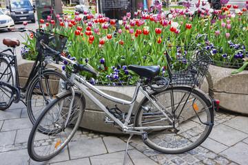 Bicycles near street flowerbed