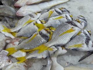 Gelbflossenfische