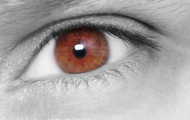 Brown eye . Macro shot