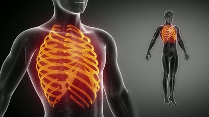 RIBS  bone skeleton x-ray scan in black