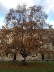Beautiful Three Trinity College