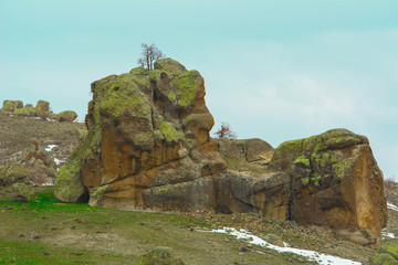 Kaya ve ağaç