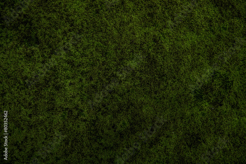 nature moss - 80352462