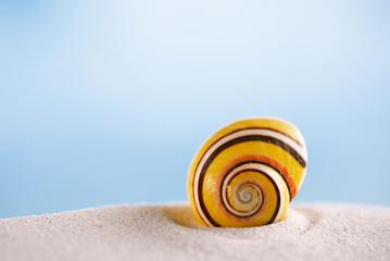 bright polymita shell on white beach sand under the sun light