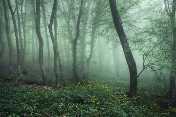 Mysterious dark forest in fog with green leaves and flowers