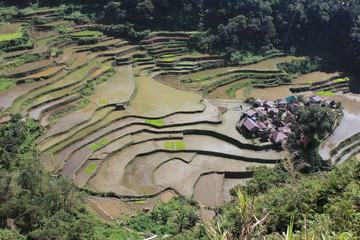 Banga-an, Reisfelder