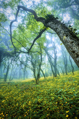 Mysterious forest in fog with green leaves and yellow flowers